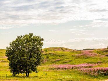 Туристов познакомят с уникальной природой Колтушских высот
