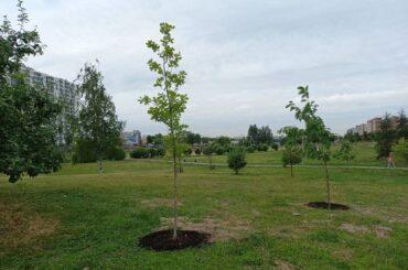 Деревья и кустарники – на учете
